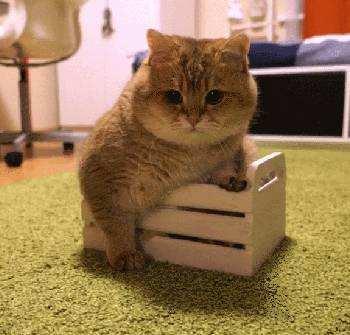 猫砂除臭比较 达人教你挑选!